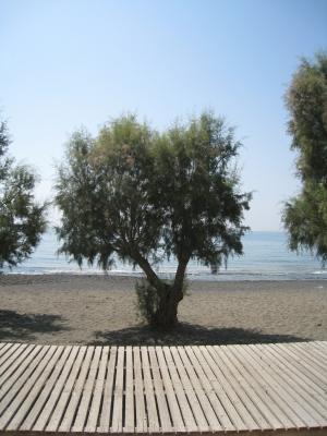 Αλμυρίκι στην παραλία της Ιεράπετρα